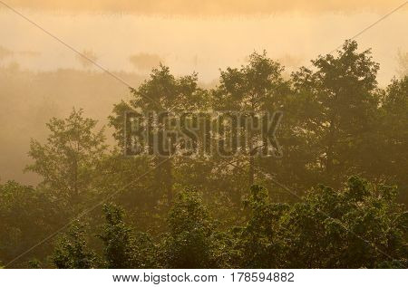 Summer morning with a mist over the river. Trees in the sunlight