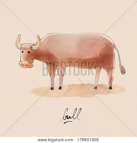 Bull Watercolor illustration