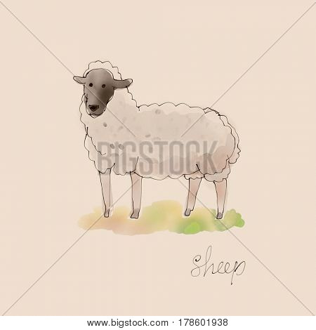 Sheep Watercolor illustration