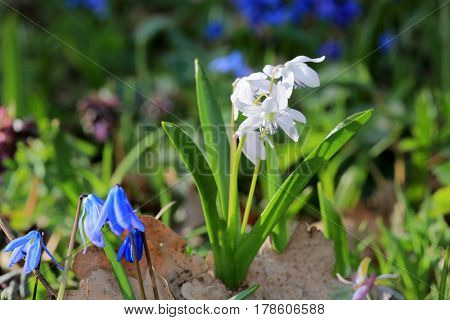 nice wild spring flowers in forest