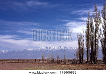 Tall thin trees along a fence line stand starkly on the high plains and prairie near Alamosa, Colorado with the Sangre de Cristo Mountains in the background