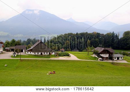 Travel To Sankt-wolfgang, Austria. The View On The Green Meadow With The Cows, With The Houses, A La