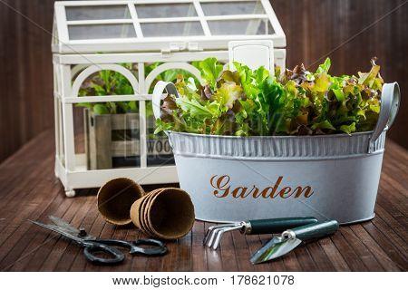 Planting - garden tools and fresh salad