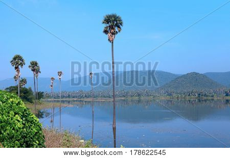 Palm trees in the middle of Mudasarlova reservoir in Visakhapatnam city India