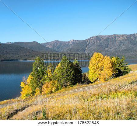Fall foliage in rural Colorado