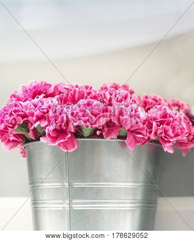 Pink Carnation in zinc bucket for background - selective focus