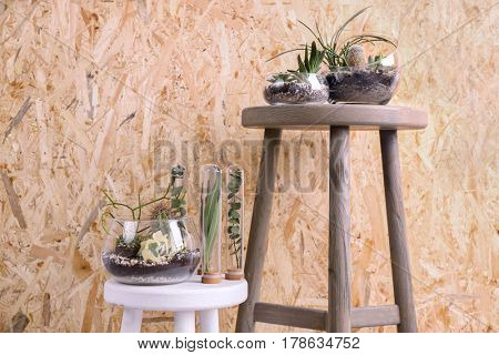 Florarium with succulents and cactus on stand against wooden background