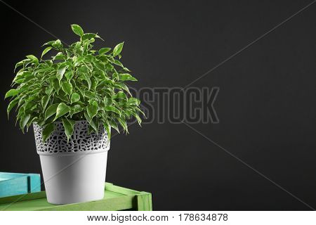 Beautiful plant on dark background
