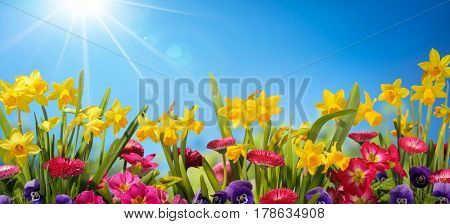 Spring flower against blue sky