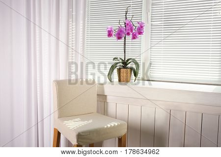 Beautiful orchid on windowsill