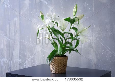 Beautiful white lilies in pot on table