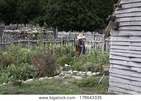 Plimoth Plantation, Plymouth, Massachusetts - September 10, 2014 - Wide view of a pilgrim woman tending her garden in the village at Plimoth Plantation, Plymouth, Massachusetts with fences wood piles and trees in the background on an overcast but br