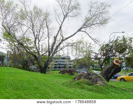 Damage and uprooted trees on The Strand in Townsville Queensland Australia after Cyclone Yasi in February 2011
