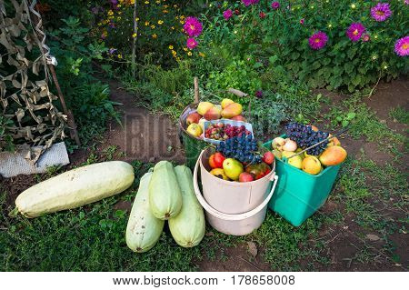 Farm Crop Of Zucchinis And Fruits
