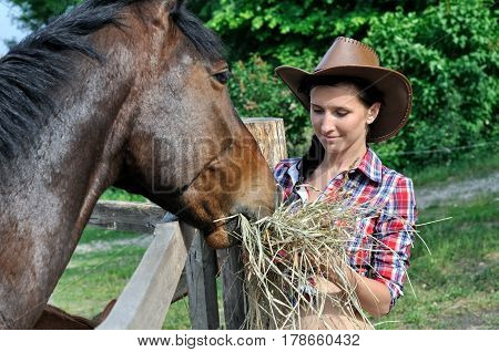 young attractive cowgirl feeds horse in the farm in summer day