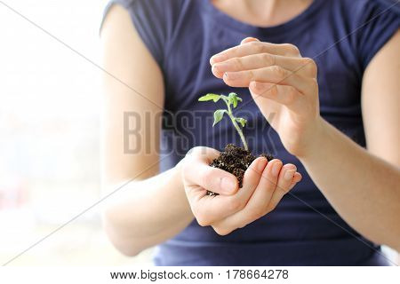 girl in a blue sweatshirt holding a green sprout with the earth / careful shelter and care of seedlings
