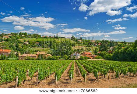 Vineyard In Beaujolais Region, France