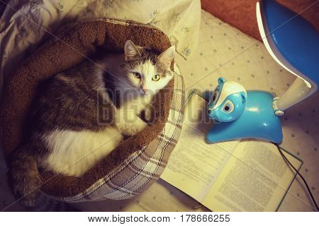Cat In Catbed With Lamp And Book Close Up Photo