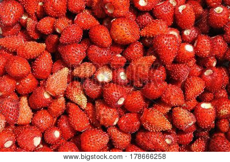 close-up of the stack of fresh wild strawberry