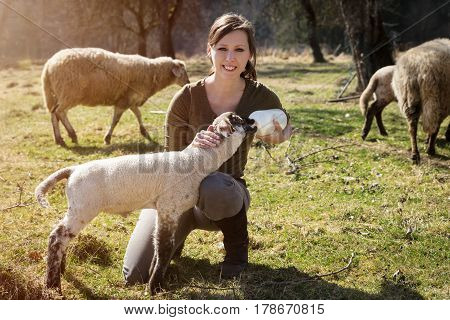 Woman is feeding a lamb with bottle of milk concept animal welfare and rearing