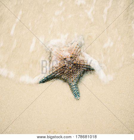 Starfish On The Beach Sand. Close Up