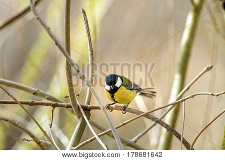 Image of a little bird sitting on a branch