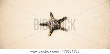 Starfish On The Beach Sand. Close Up.