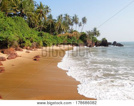 Coconut Palms On The Beach Near The Village Of Thottada