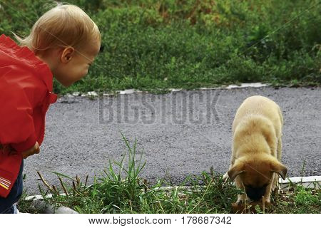 The Kid Watches As The Puppy Gnaws Bone