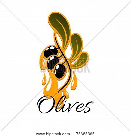 Olive fruit branch with oil drop symbol. Olive oil drops from olive tree branch with ripe black fruits and green leaves. Oil bottle label, vegetarian menu or mediterranean cuisine recipe design