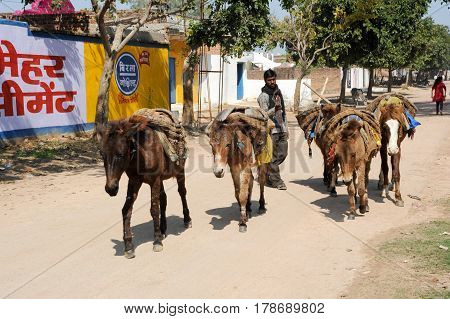Man With His Herd Of Horses On The Street