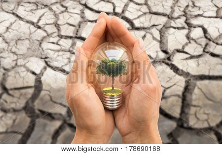recycling, conservation, environment and ecology concept - close up of hands holding light bulb with tree inside over dry cracked ground
