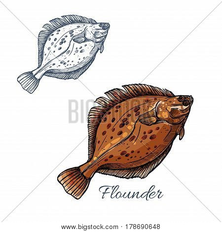 Flounder fish isolated sketch. Brown flatfish or sand flounder fish with dark spots. Predatory marine animal for seafood market label or fishing sport symbol design