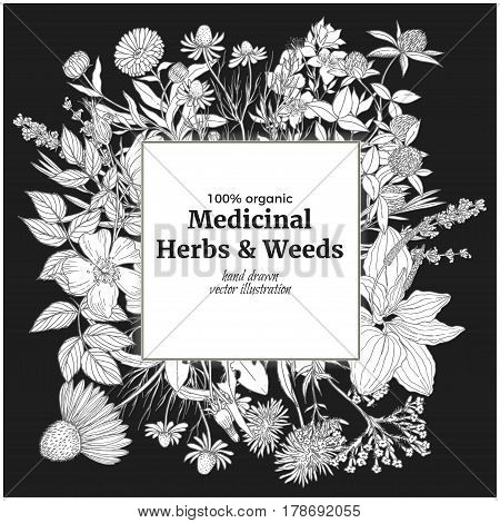 Square banner with medicinal flowers and herbs on the black background, vintage vector illustration, echinacea, chamomile, lavender, calendula, clover, dandelion, st john's wort, plantain, dog rose and valeriana