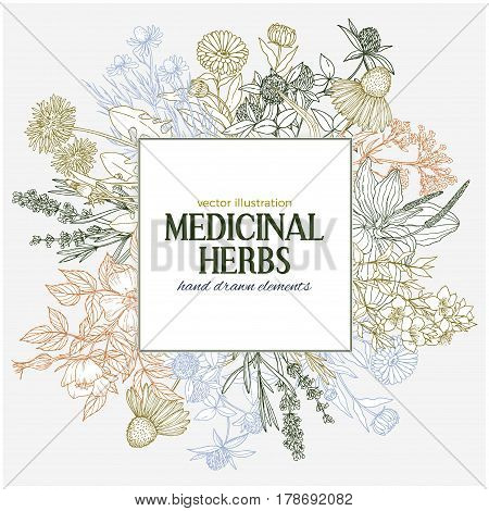 Square text field with hand-drawn colored medicinal herbs and flowers, vector sketch, echinacea, chamomile, lavender, calendula, clover, dandelion, st john's wort, plantain, dog rose and valeriana