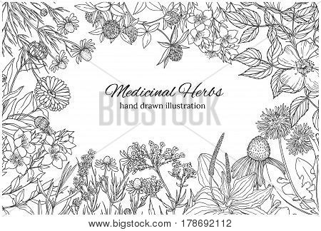 Horizontal monochrome banner with medicinal flowers and herbs on white background, vector sketch, vintage style,  echinacea, chamomile, lavender, calendula, clover, dandelion, st john's wort, plantain, dog rose and valeriana