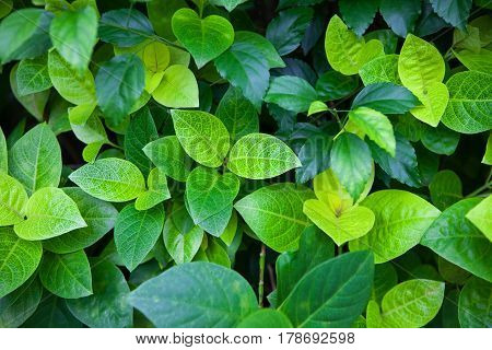 Thick jungle green leaves summer background in exotic tones. Greenery