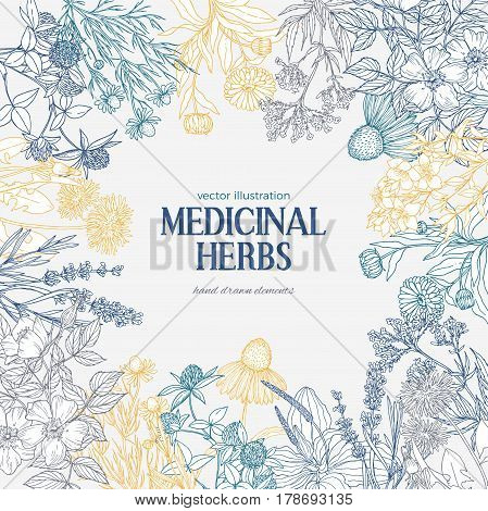 Square color card template with medicinal herbs and flowers, vector vintage illustration, hand-drawn sketch, echinacea, chamomile, lavender, calendula, clover, dandelion, st john's wort, plantain, dog rose and valeriana