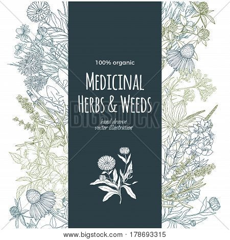 vintage sketch, vector illustration, vertical turquoise banner with color medicinal herbs and flowers on white background, vintage sketch, vector illustration,  echinacea, chamomile, lavender, calendula, clover, dandelion, st john's wort, plantain, dog ro