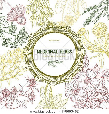 Beautiful wicker frame with place for text surrounded by color sketches of medicinal herbs and flowers, vector vintage sketch illustration, echinacea, chamomile, lavender, calendula, clover, dandelion, st john's wort, plantain, dog rose and valeriana