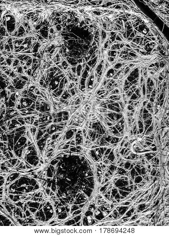 Amazing and incredible plant roots like a neural network