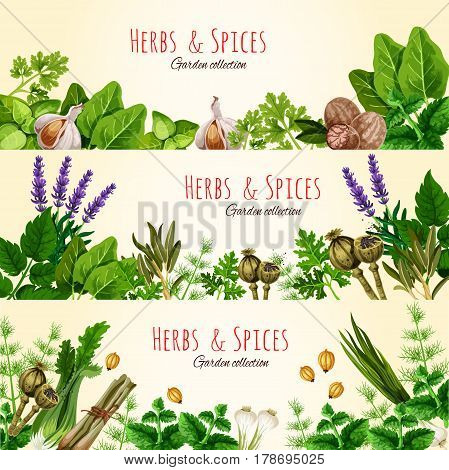 Green herbs and spices cartoon banner set. Basil, mint, parsley, garlic, green onion, dill, fennel, bay, nutmeg, cardamom, poppy and lavender flowers for organic farm, spice shop label design