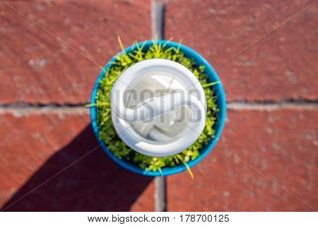 Energy saving light bulb growing from pot viewed from top angle. Green energy concept