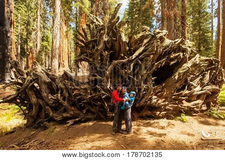 Family With Infant Visit Sequoia National Park In California, Usa