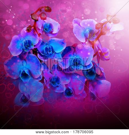 Beautiful flowers blue orchids background for cover cd