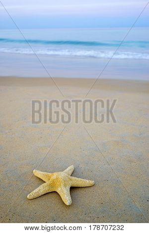 Starfish on the tropical  beach at dusk
