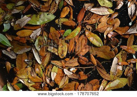 Brown leaves after a rain, cool brown color with soft ligth