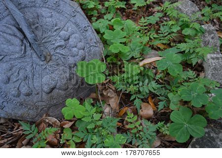 combination of green and brown and grey, clover with a sundial