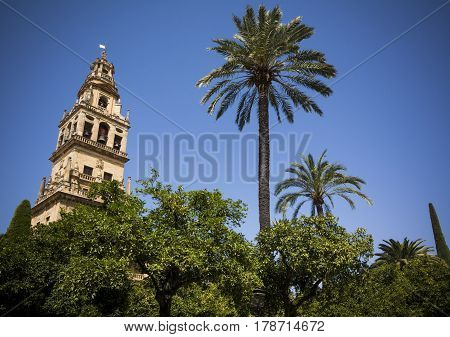 Bell tower from the court of oranges in Cordoba