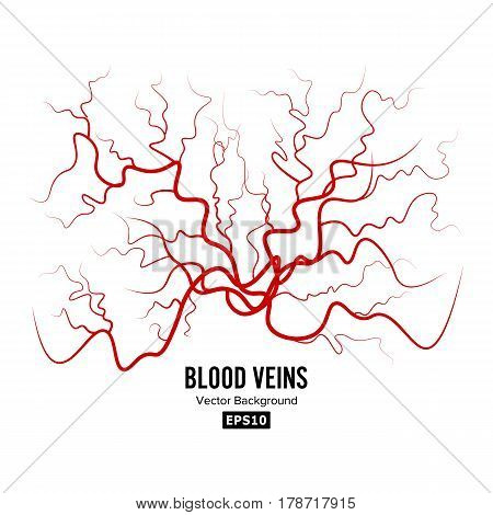 Human Blood Veins Vector. Red Blood Vessels Design. Illustration Isolated On White